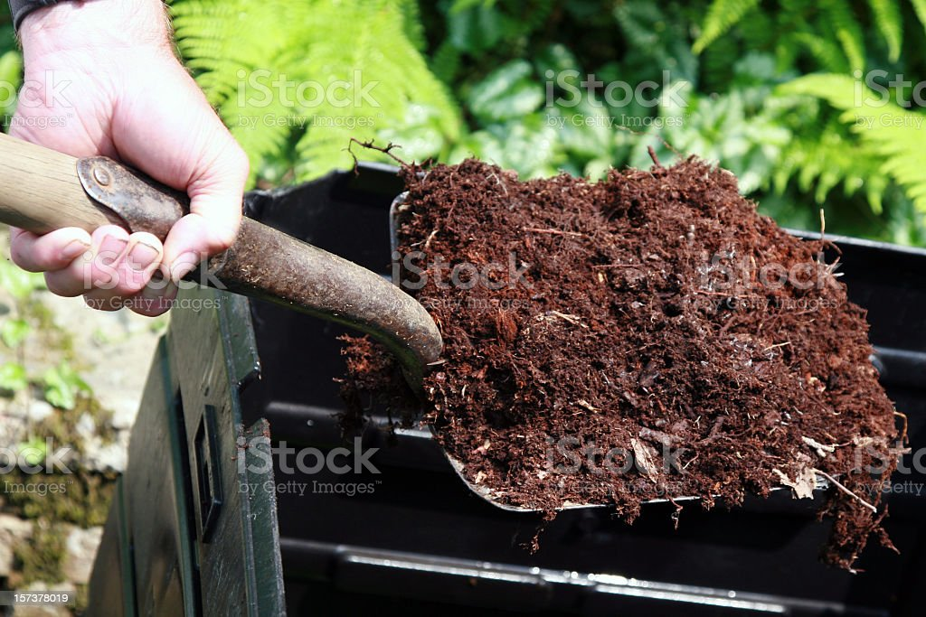 Hand Holding Shovel Full of Compost, Home Composting stock photo