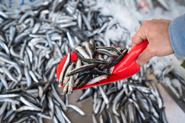 pala de sujeción manual con pescado anchoa completo a la venta en el mercado - anchoa fotografías e imágenes de stock