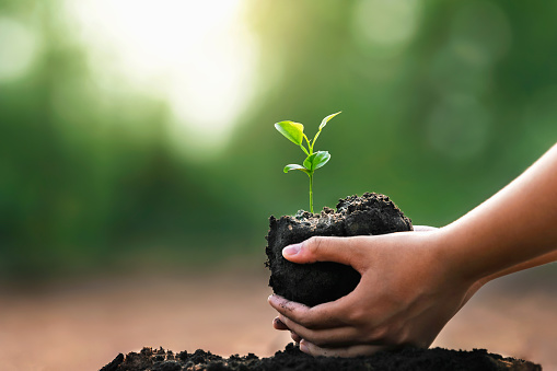 hand holding small plant for planting in garden