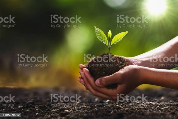 Hand holding small tree for planting concept green world picture id1135253768?b=1&k=6&m=1135253768&s=612x612&h=akexhy2tbjpmci3kw hcywssuzy7vu9mayyam6hl2xe=
