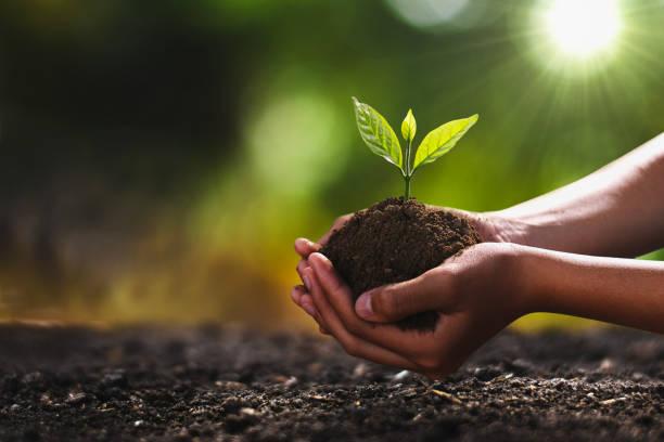 mano sosteniendo un pequeño árbol para plantar. concepto mundo verde - árbol fotografías e imágenes de stock