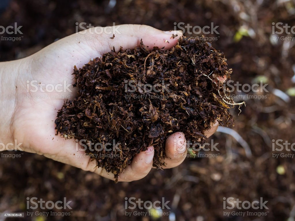 Hand holding soil surface top view stock photo