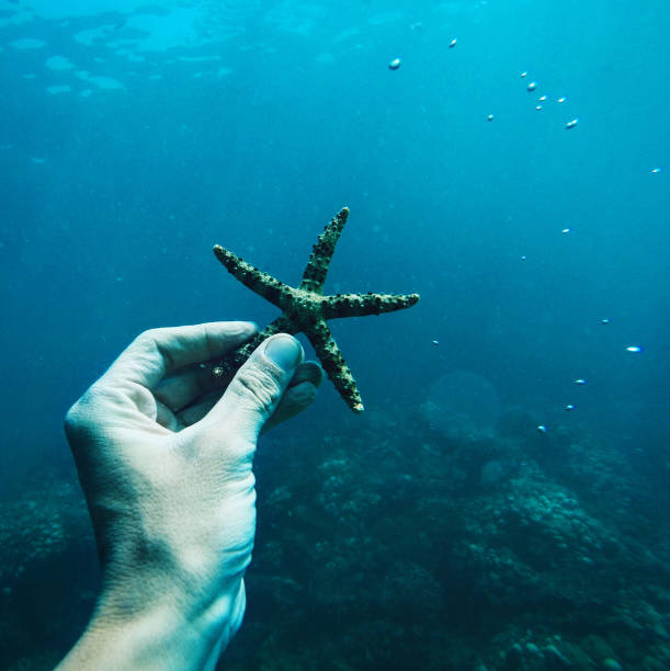 hand holding starfish underwater. diving at tropical island bali - immerse in the stars foto e immagini stock