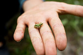 A child in nature with a baby Sierra Treefrog placed in hand
