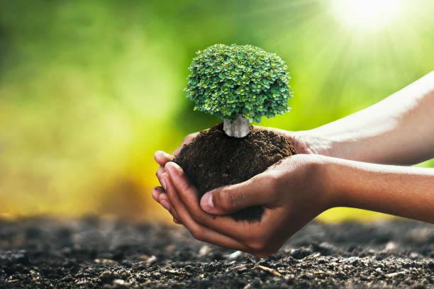 Hand hält Baum für die Pflanzung. Konzept grüne Welt – Foto