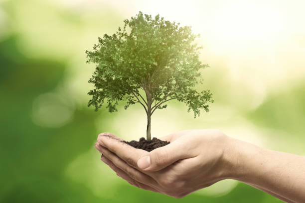 Hand holding tree. Save nature, ecology concept stock photo
