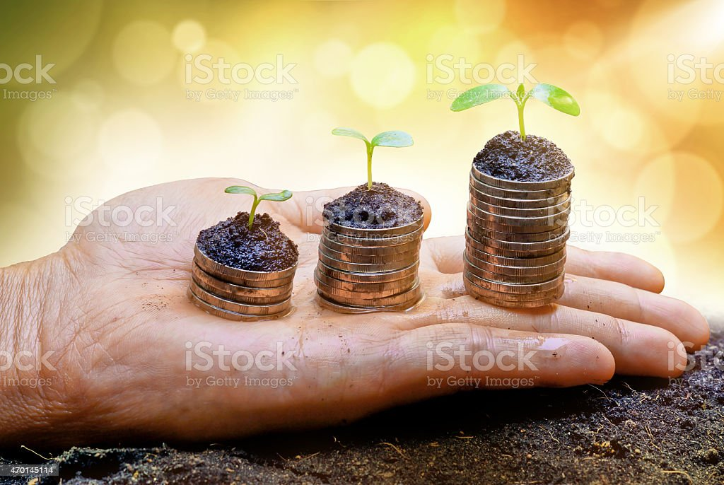 Hand holding trees growing on stacks of coins stock photo