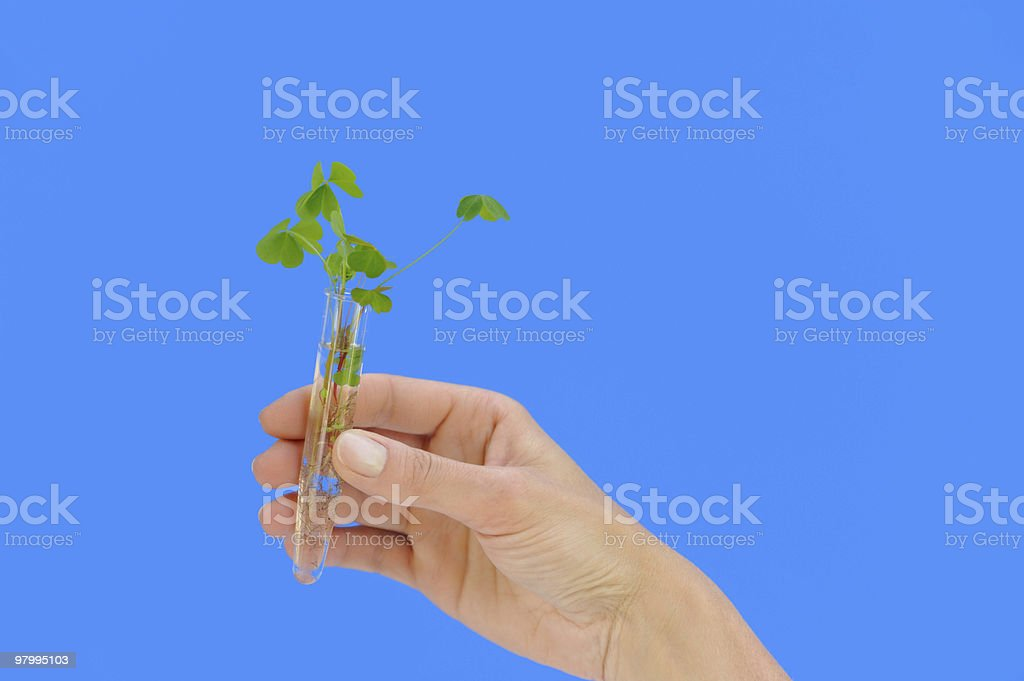 Hand holding tube with fresh  sorel (oxalis) - isolated royalty-free stock photo