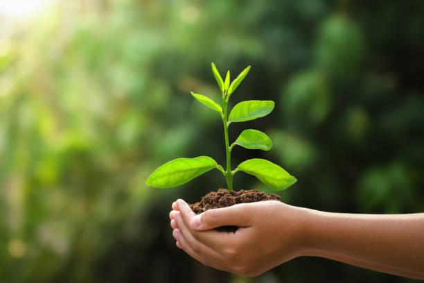 Hand hält junge Pflanze und grünen Hintergrund mit Sonnenschein. Öko-Konzept Erdtag – Foto