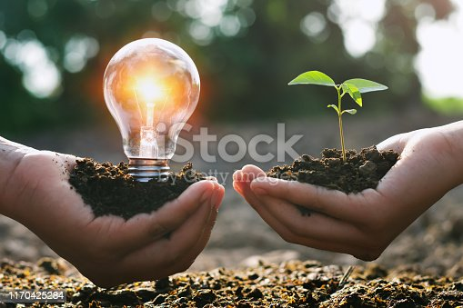 hand holding young plant and ligh bulb. concept saving energy. eco earth day
