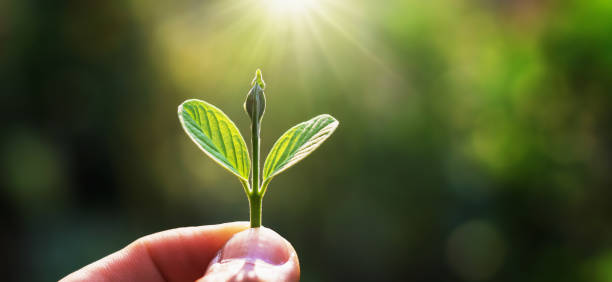 Hand hält jungen Baum für die Pflanzung mit Sonnenaufgang. Konzept retten Erde – Foto