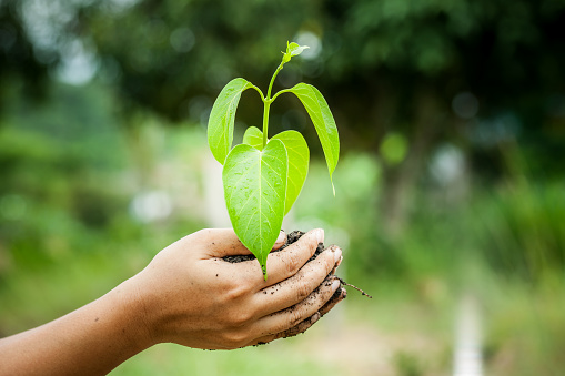 486530452 istock photo hand holding  young tree in soil 488108904