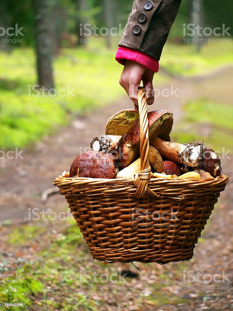 A hand holds a basket filled with mushrooms stock photo