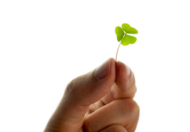 Hand holds a clover leaf on white background. Cut out.  Eco friendly concept.  St. Patricks day. stock photo