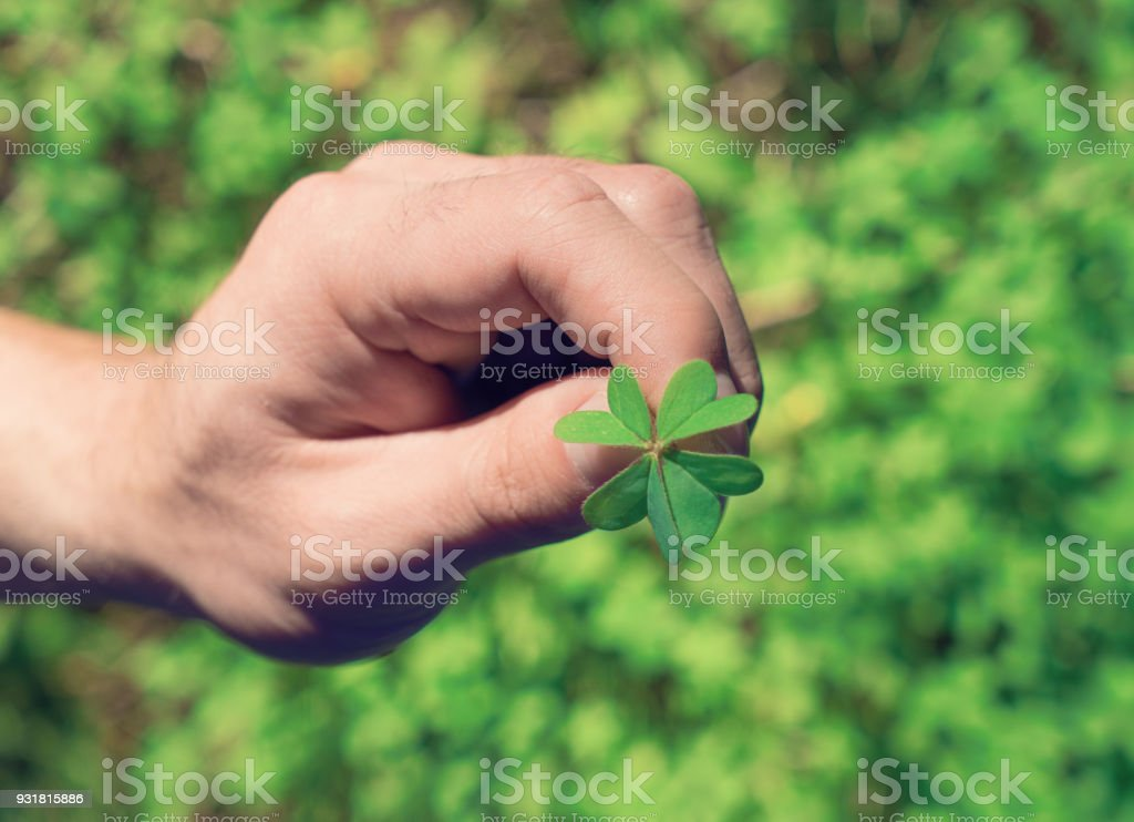 Hand holds agreen leaf of clover stock photo