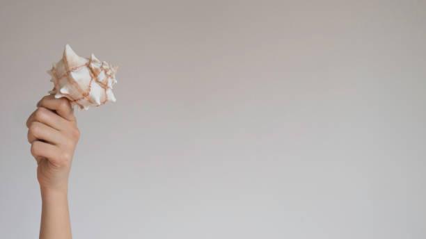 hand houdt spiraal gestreepte schelp op een lichtgrijze achtergrond - pink and orange seashell background stockfoto's en -beelden