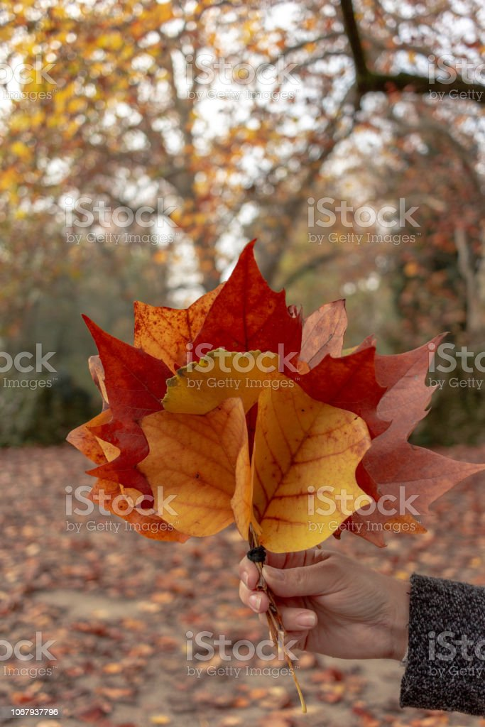 Hand Holing a Colorful Leaf Bouquet - foto stock