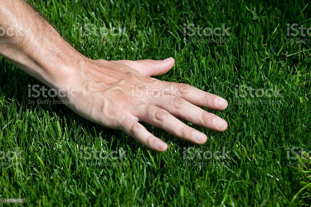 Hand hovering over fresh cut grass A hand touching fresh cut grass Bermuda Stock Photo