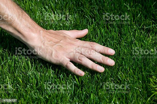 Hand Hovering Over Fresh Cut Grass Stock Photo - Download Image Now