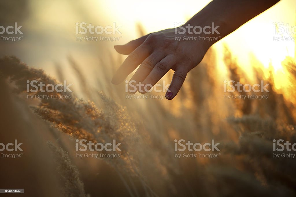 Hand in a field stock photo