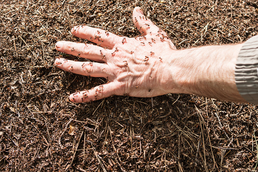 Hand in an anthill