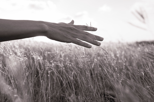 523172398 istock photo Hand in field 514363941