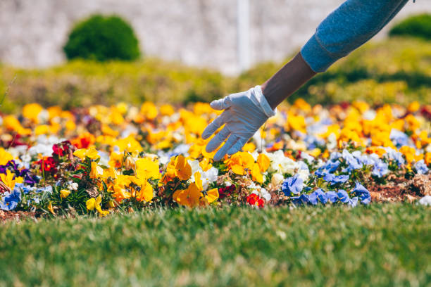 hand in medical protective glove touches flowers in park (covid-19 concept) - lepro stock pictures, royalty-free photos & images