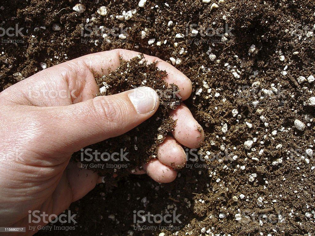 Hand in Soil stock photo