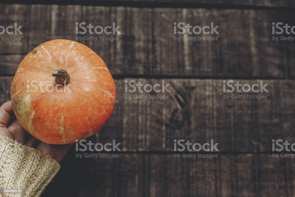 hand in sweater holding pumpkin on rustic wooden background, top view. space for text. cozy autumn mood. fall holiday. stylish image thanksgiving or halloween concept greeting card royalty-free stock photo