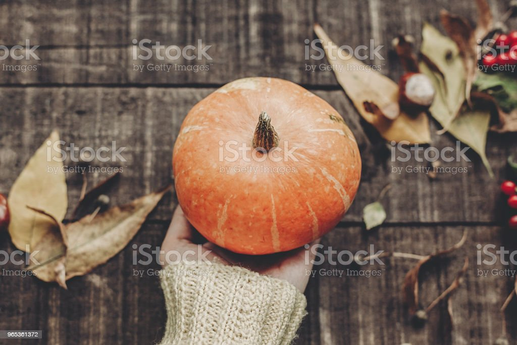 hand in sweater holding pumpkin with leaves and berries on rustic wooden background, top view. space for text. thanksgiving or halloween concept greeting card. cozy autumn mood zbiór zdjęć royalty-free