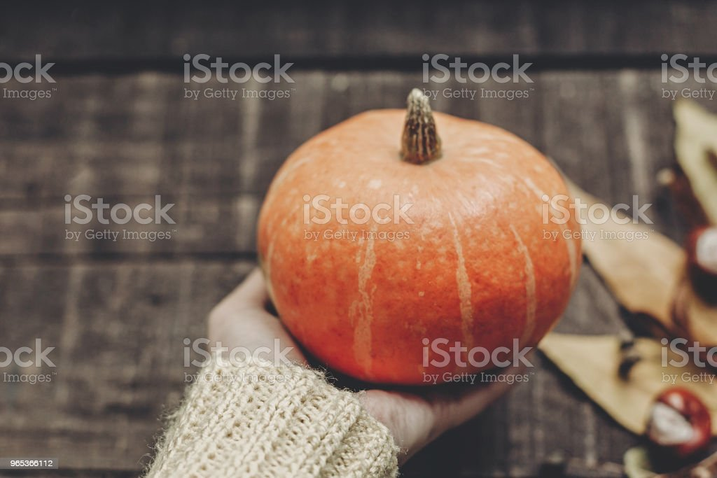 hand in sweater holding pumpkin with leaves and berries on rustic wooden background, top view. space for text. thanksgiving or halloween concept greeting card. cozy autumn mood royalty-free stock photo