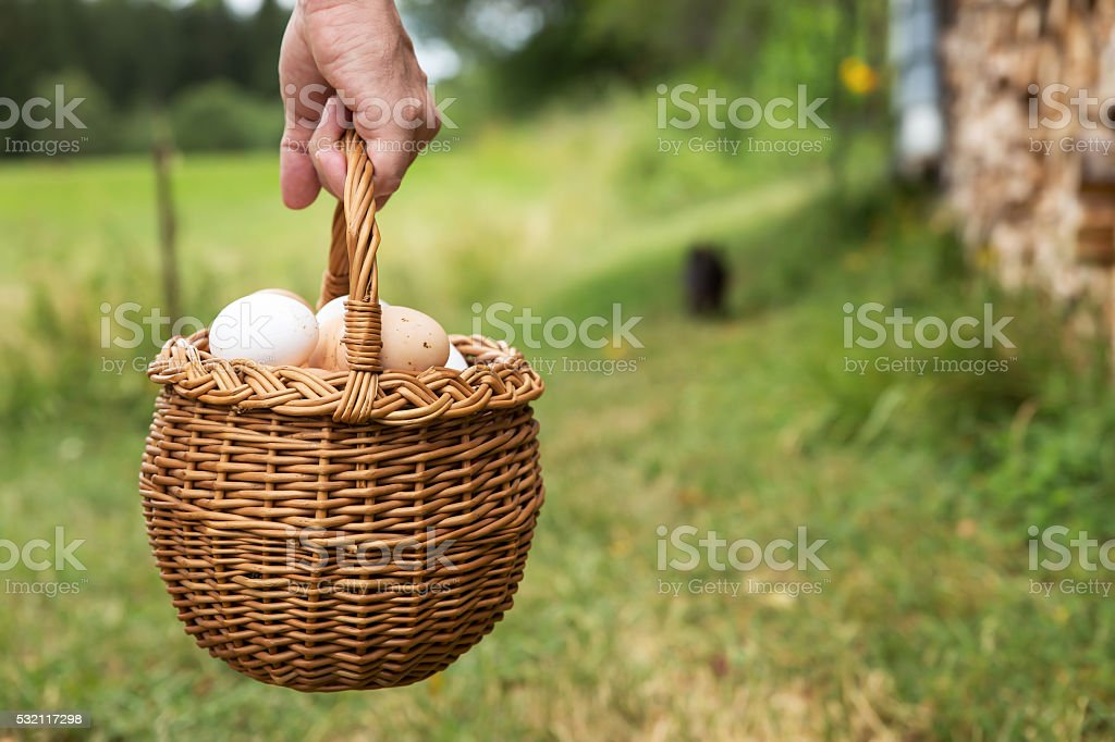 hand is holding a basket full of eggs stock photo