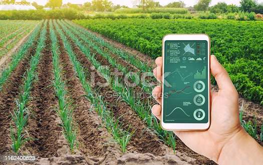 istock A hand is holding a smartphone with infographics on the background of field of young green leek plantations. innovative technologies, data analyzing on plants status. Growing vegetables, Agribusiness 1162400823