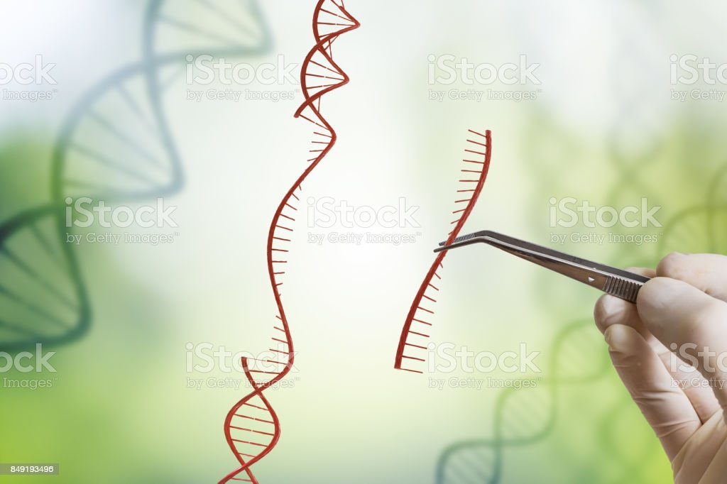 Hand is inserting sequence of DNA. Genetic engineering, GMO and Gene manipulation concept. stock photo
