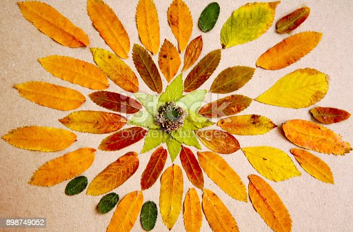 istock Hand made mandala made from dried leaves and plants 898749052