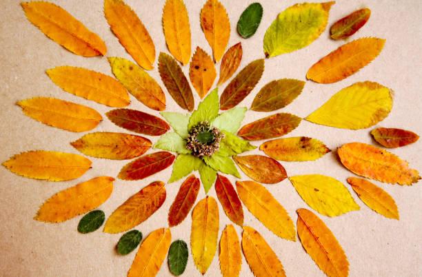 Handgemachte Mandala hergestellt aus getrockneten Blättern und Pflanzen – Foto