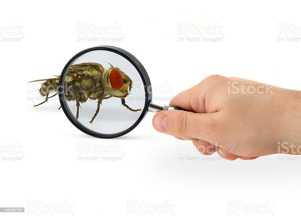 hand magnifying fly royalty-free stock photo