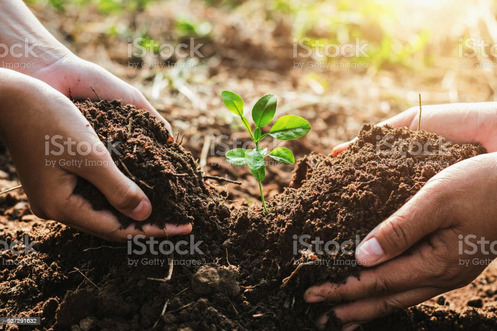 hand mater and child helping planting small tree in garden. concept ecology - Royalty-free A Helping Hand Stock Photo