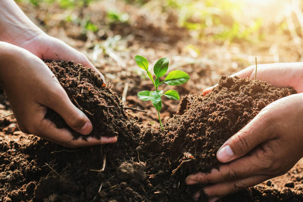 hand mater and child helping planting small tree in garden. concept ecology - piantare foto e immagini stock