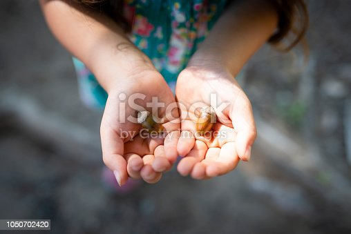 istock Hand of a child with acorns 1050702420