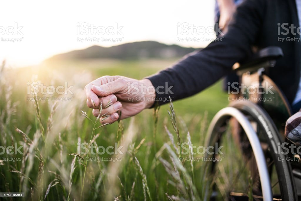 A hand of a senior man in wheelchair holding grass flower in nature. Close up. stock photo