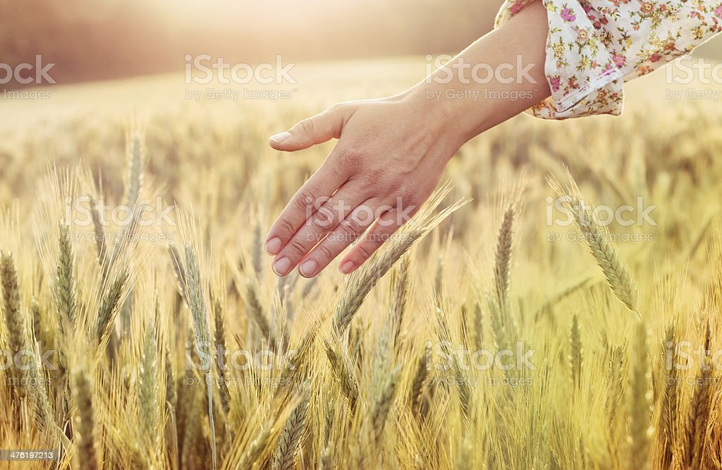 hand of a young woman in a field royalty-free stock photo