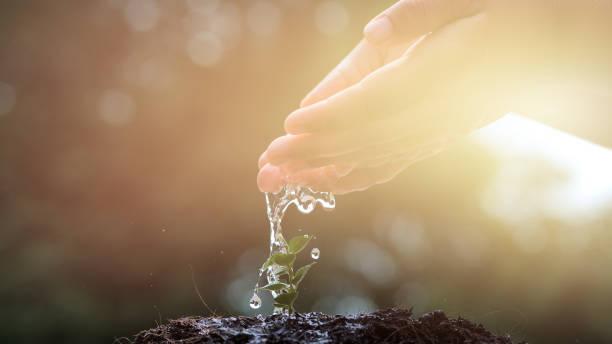 main du garçon arroser un arbre jeune plante poussant sur un sol fertile dans le matin clair, ralenti. conservation des ressources naturelles. plantation d'arbres, protéger la nature, développement durable, durable - recyclage main photos et images de collection