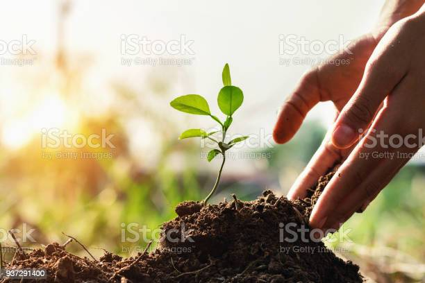Hand of children planting small tree in garden with sunset concept picture id937291400?b=1&k=6&m=937291400&s=612x612&h=iflsvtqbpn5 r3oainl6d mux1cy8kd1zhma1sdycim=