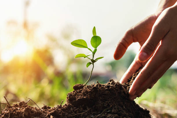 Hand of children planting small tree in garden with sunset concept picture id937291400?b=1&k=6&m=937291400&s=612x612&w=0&h=khj63ioyjv8hwdvyh8nqnogvt pjn5fafkrpn4shc00=