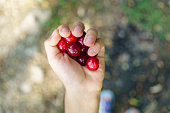 Hand of children with cherry