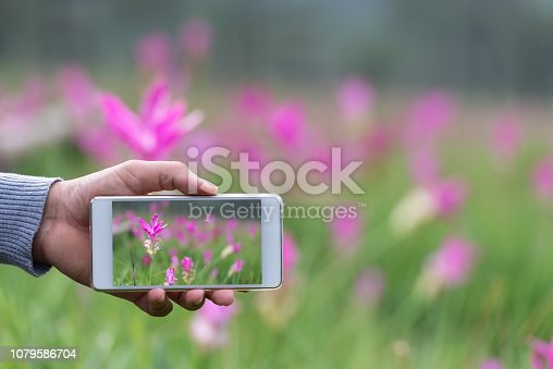 Hand of male holding smartphone on forest. technology, travel communication and people concept
