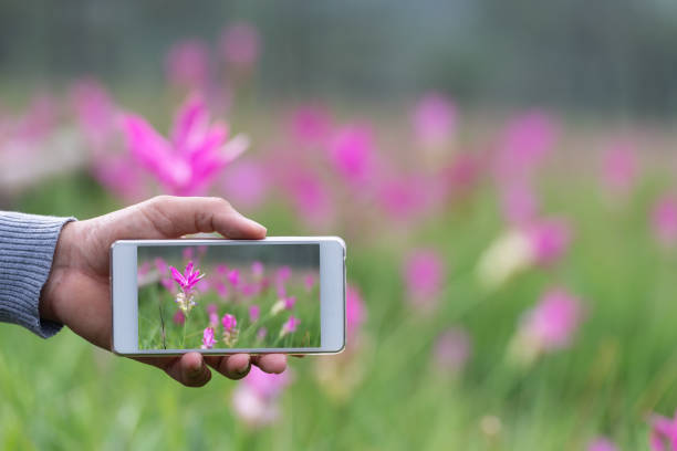 hand of male holding smartphone on forest. technology, travel communication and people concept - photo messaging stock photos and pictures