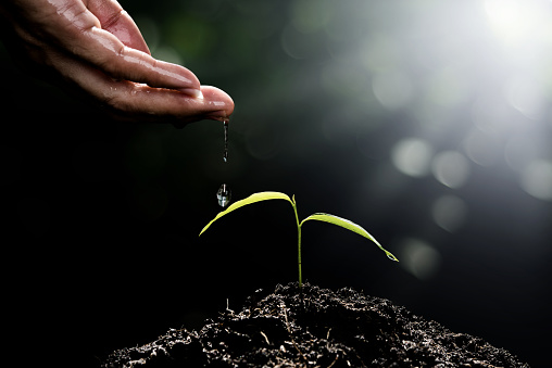 912882270 istock photo Hand of man watering small plant on nature green bokeh background seeding ecology growth new life concept 937836592
