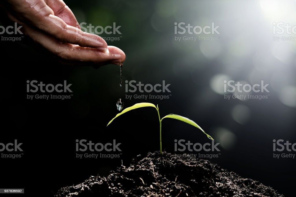 Hand of man watering small plant on nature green bokeh background seeding ecology growth new life concept stock photo